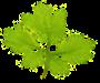net-ecologie.com